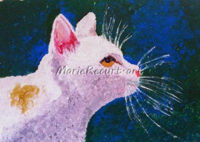 Le chat de Max